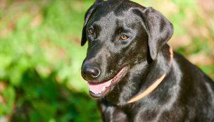 Hundefotos_website---293
