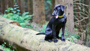 Hundefotos_website---346